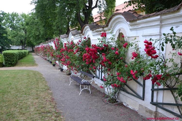 Замковый сад, Духцов