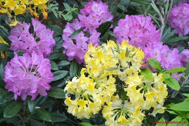 Цветы, Пругонице