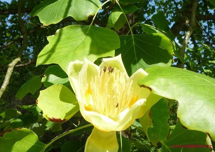 Местная флора, Лугачовице, Чехия